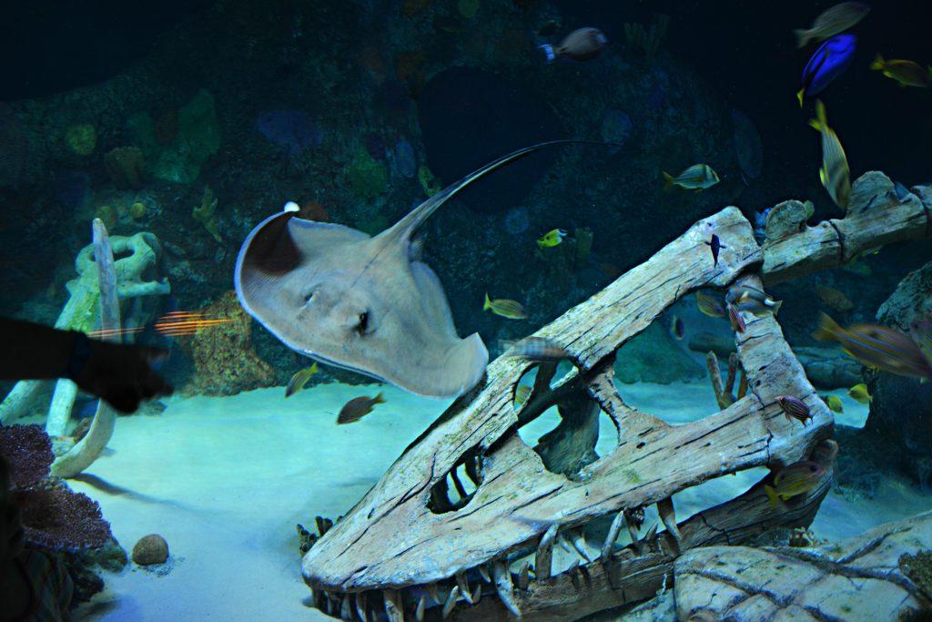 Sea Life Kansas City Aquarium String Ray Field Trip Iowa